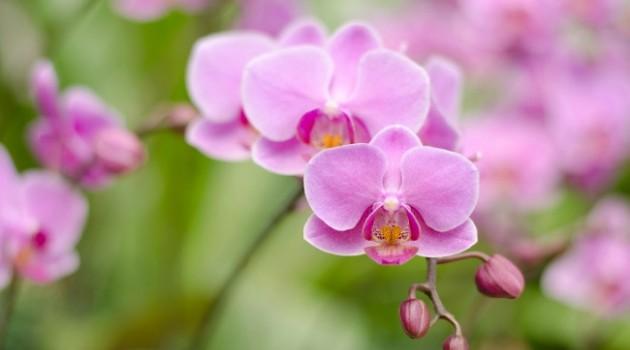 Flores e Orquídeas